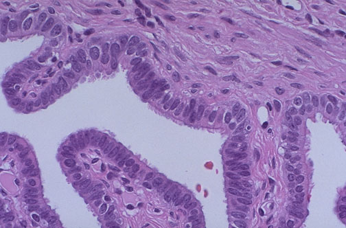 Normal Histology